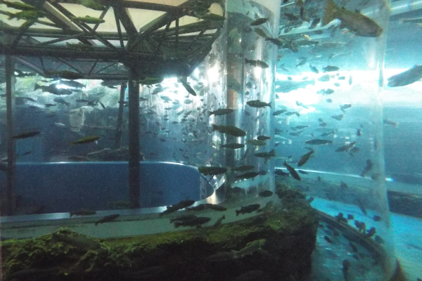 森の水族館